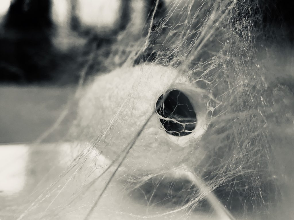 A empty moth's cocoon with an opening at one end.